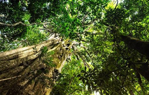 Habitat Restoration and Carbon Dioxide Sequestration in the Tropics